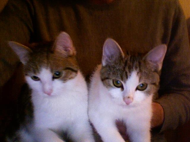 Franz und Merle